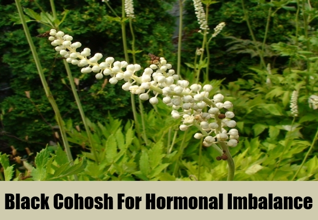 Black Cohosh For Hormonal Imbalance