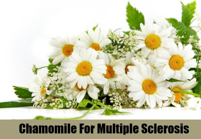 Chamomile For Multiple Sclerosis