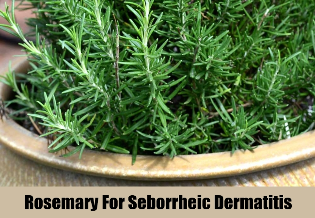 Rosemary For Seborrheic Dermatitis