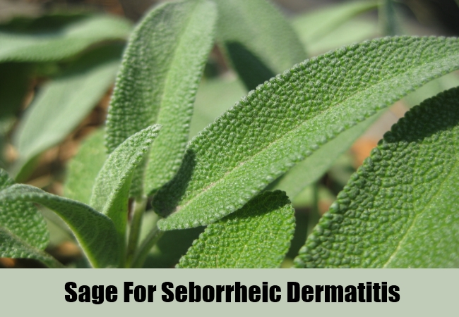 Sage For Seborrheic Dermatitis