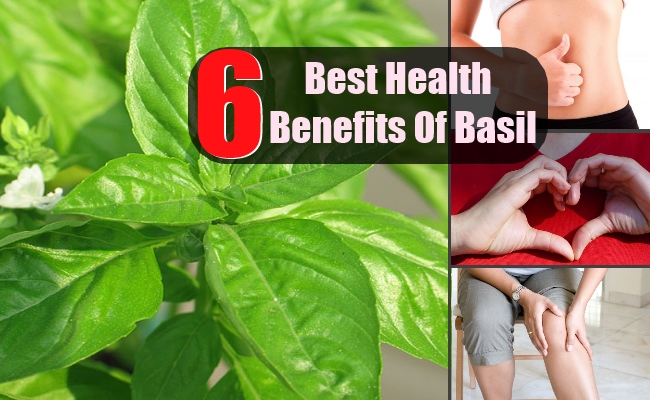 6 Top Health Benefits Of Basil