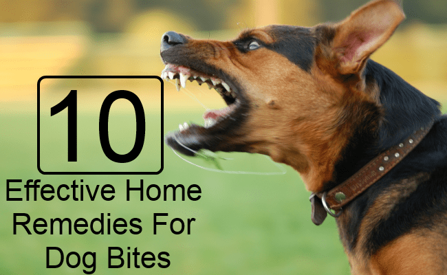 Effective Home Remedies For Dog Bites