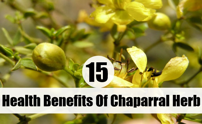 Health Benefits Of Chaparral Herb