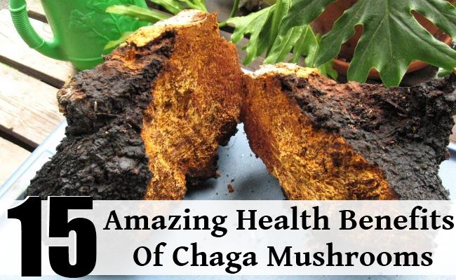 Amazing Health Benefits Of Chaga Mushrooms