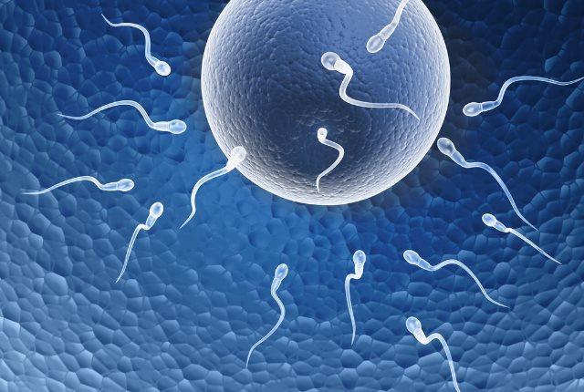 Increases Fertility
