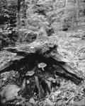 2017062_AT_mushroom_in_fallen_tree