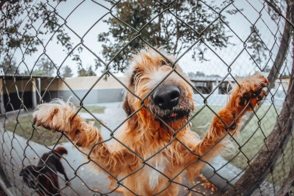 Even dogs are annoying in quarantine. Yes they are!