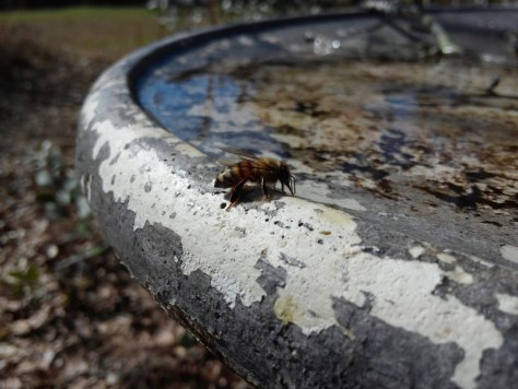 Bee, drinking Feb 2015