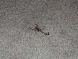 Scorpion, now deceased