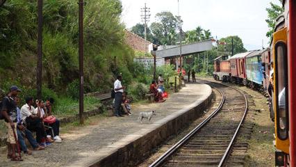 Train 1007 at Galboda
