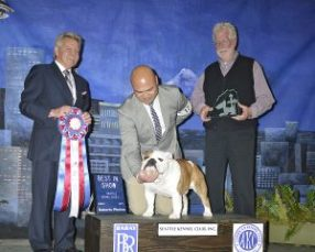 GCH WILSON'S I'M YOUR HANDYMAN. SEATTLE KENNEL CLUB BEST IN SHOW DAY 2, SUNDAY, MARCH 8TH. PHOTO COURTESY OF RANDY ROBERTS