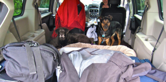 Seattle DogSpot Hits the Road!