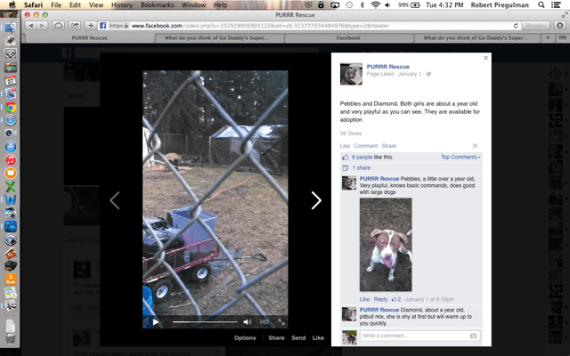 In this screenshot of a video from the PURRR Facebook page you can see the orange extension chord leading to a pop up tent where the dogs' kennels are.