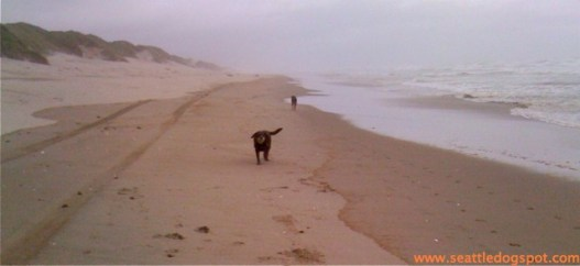 Seven Devils State Recreation Site is another great offleash beach on the Oregon Coast. Photo from Seattle DogSpot.