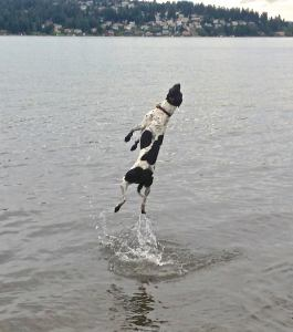 More fun in Lake Washington at Magnuson Off-Leash Dog Area. Photo from Seattle DogSpot.