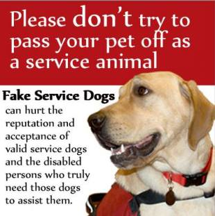 A record number of people in Washington could complain about service dogs this year. Image from www.kikiunhinged.com.