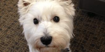Dog Friendly Business Profile – FareStart