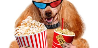 Dog Friendly Outdoor Movies in Seattle – Summer 2018
