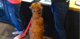 Dogs at Amazon - A dog stops at the reception desk for a treat.