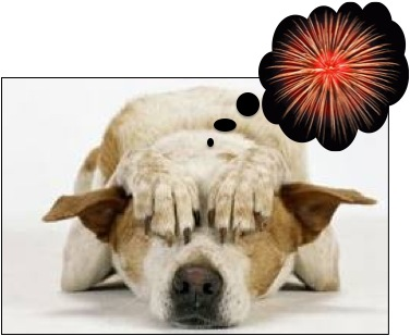 Learn how to calm a dog down during fireworks