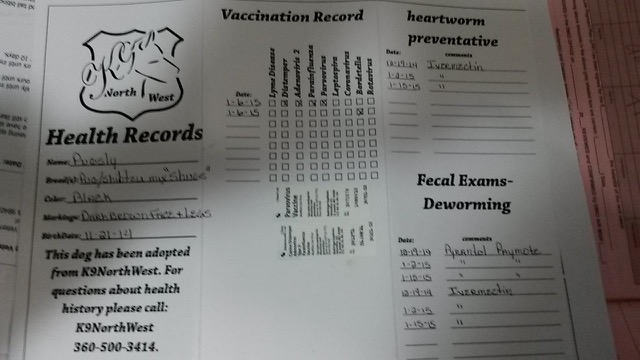 K9 Northwest provided their own document saying Captain was vaccinate for distemper but without a record of vaccination from a vet just checking a form doesn't mean he was vaccinated. Photo credit withheld.