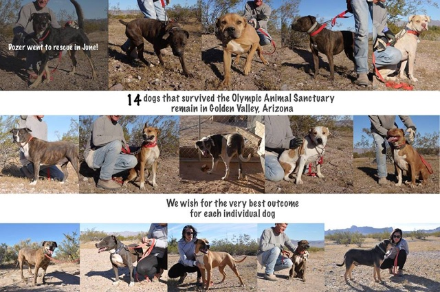 """These are the 14 dogs from the Olympic Animal """"Sanctuary"""" that have been living outside in kennels since January , 2014. Image from Sanctuary Watch."""