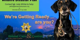 Wenatchee Valley Humane Society providing shelter for pets displaced by Okanogan wildfires
