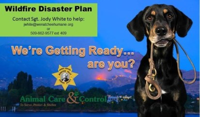 Image from Wenatchee Valley Humane Society.