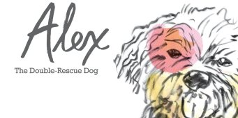 Seattle author's new children's book features rescue dog