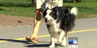 UW testing drug that could extend dogs' lives