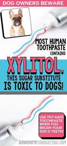 xylitol poisoning