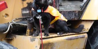 Seattle Humane Society breaks ground on $25 million Pet Adoption Center