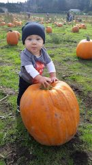 Pumpkin Patch at Hunter Family Farm near Seattle Washington