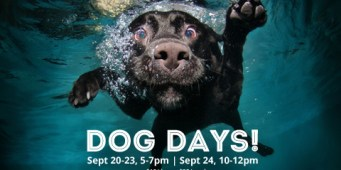 Three Seattle Swimming Pools Open to Dogs This Month