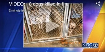 Candlelight Vigil to Be Held in Olympia Sunday for 18 Dogs That Died in Furever Homes Rescue Fire