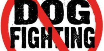 Animal Groups Offer $4000+ Reward for Information About Dog Fighting in Spokane Valley