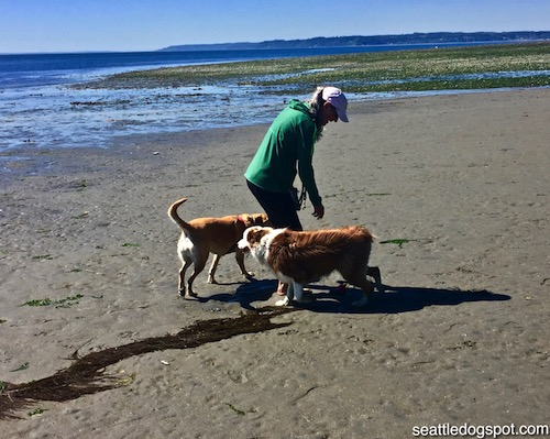 Haley making Friends at the dog beach