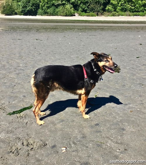 Miguel gives Double Bluff Off-Leash Dog Park two (non-opposable) thumbs up!
