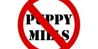Puppy Mill Ban