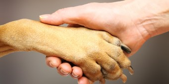 Connection as a Springboard for Better Dog Behavior: Part III, Trust and Negative Space