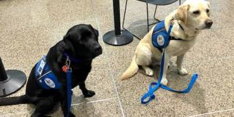 Thurston County Courthouse Dogs Provide Comfort to Las Vegas Shooting Survivors