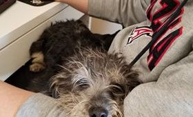 Scalawaggles Pet Rescue Adopts Out Another Sick Dog