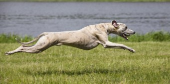 Seattle Area Weekend Dog Events: Friday, August 3 – Sunday, August 5