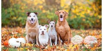 7 Tips to Keep Your Dog Safe on Halloween