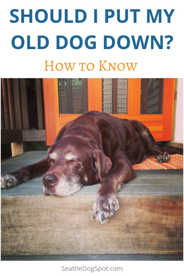 How to Clean Dog Diarrhea From Carpet