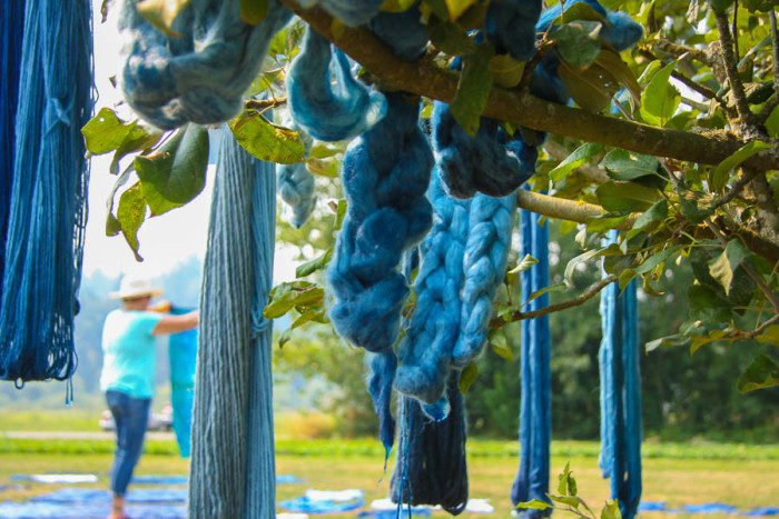 Yarns dyed with natural indigo hang on a tree at the Jubilee Farm. (Photo by Carolyn Higgins)