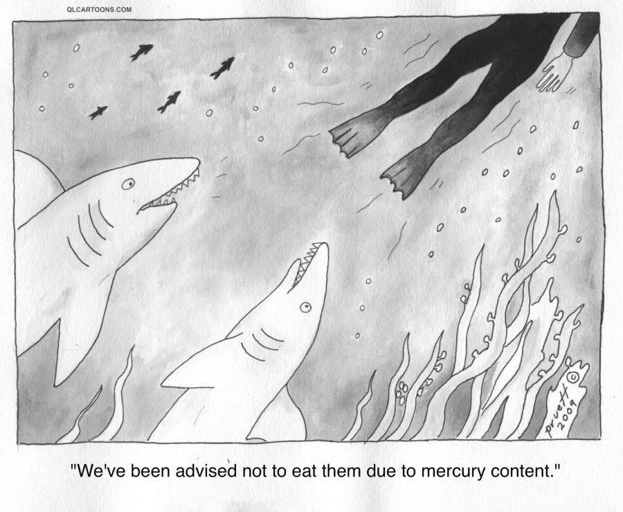 sharks_mercury