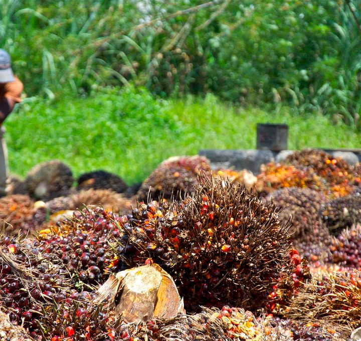 Cameroon: The Dark Side of the Agri-Business