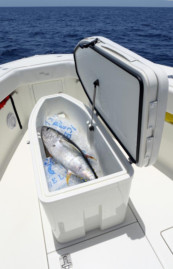 How Fresh Fresh Fish