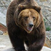 bear complex